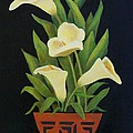 Calla Lilies by Jane Landry  Read