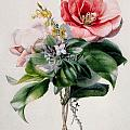 Camellia And Broom by Marie-Anne