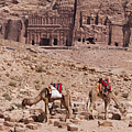 Camels In Front Of The Royal Tombs Petra by Martin Child