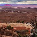 Canyonland Overlook by Robert Bales