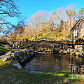 Cape Cod Grist Mill by Catherine Reusch  Daley