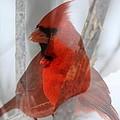 Cardinal Collage by Rick Rauzi