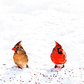 Cardinal Couple II by Tamyra Ayles