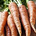 Carrots by Elena Elisseeva