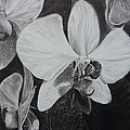 Cascade Of Orchidds by Estephy Sabin Figueroa