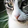 Cat Portrait by Julia Williams