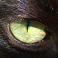 Cat's Eye by Shannon Blanchard