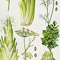 Celery - Fennel - Dill And Celeriac  by Elizabeth Rice