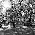 Central Park Mall In Black And White by Rob Hans