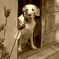 Charleston Shop Dog In Sepia by Suzanne Gaff