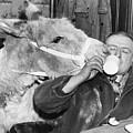 Cheeky Donkey by Fox Photos