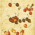 Cherries by Bonnie Bruno