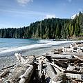 China Beach Vancouver Island Juan De Fuca Provincial Park by Andy Smy