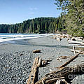 CHINA WIDE china beach juan de fuca provincial park vancouver island BC canada Print by Andy Smy