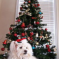 Christmas Card Dog by Vijay Sharon Govender