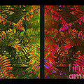 Christmas Fern Diptych by Judi Bagwell