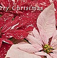 Christmas Poinsettias Print by Michael Peychich