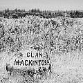 clan mackintosh memorial stone on Culloden moor battlefield site highlands scotland by Joe Fox