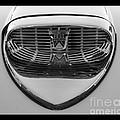 Classic Ford Thunderbird Hood