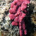 Close-up Of Live Sponge by Ted Kinsman