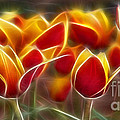 Cluisiana Tulips Fractal by Peter Piatt