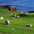 Co Cork, Beara Peninsula by The Irish Image Collection