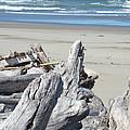 Coastal Driftwood Art Prints Blue Waves Ocean by Baslee Troutman