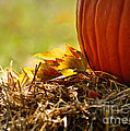 Colorful Autumn by Nava Thompson
