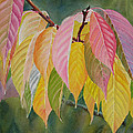 Colorful Fall Leaves by Sharon Freeman