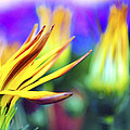 Colorful Flowers by Sumit Mehndiratta