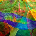 Colors Of Autumn by Shirley Sirois