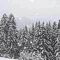 Coniferous Forest In Winter, Alps by Konrad Wothe