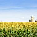 Corn Field With Silos by Elena Elisseeva