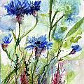 Cornflowers Korn Blumen Watercolor Painting Print by Ginette Callaway