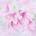 Cotton Candy Print by Brenda Bryant