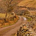 Country Lane Yorkshire Dales by Trevor Kersley