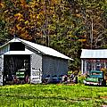 Country Life by Steve Harrington
