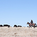 Cowboy And Cattle by Cindy Singleton