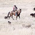 Cowboy by Cindy Singleton