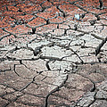 Cracked Earth by Athena Mckinzie