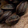 Cracked Pecan Shells