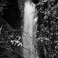 Cranny Falls Waterfall Carnlough County Antrim Northern Ireland Uk by Joe Fox