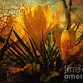 Crocus In Spring Bloom by Ann Powell
