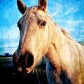 Curious Horse by Toni Hopper