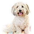 Cute Dog Portrait by Elena Elisseeva