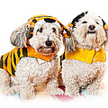 Cute Dogs In Halloween Costumes by Elena Elisseeva