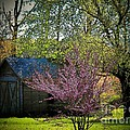 Daddys Old Shed In The Spring by Joyce Kimble Smith