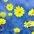 Daisies On Blue by Al Hurley