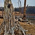 Dead Wood by Paul Ward