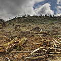 Deforested Area Print by Ned Frisk